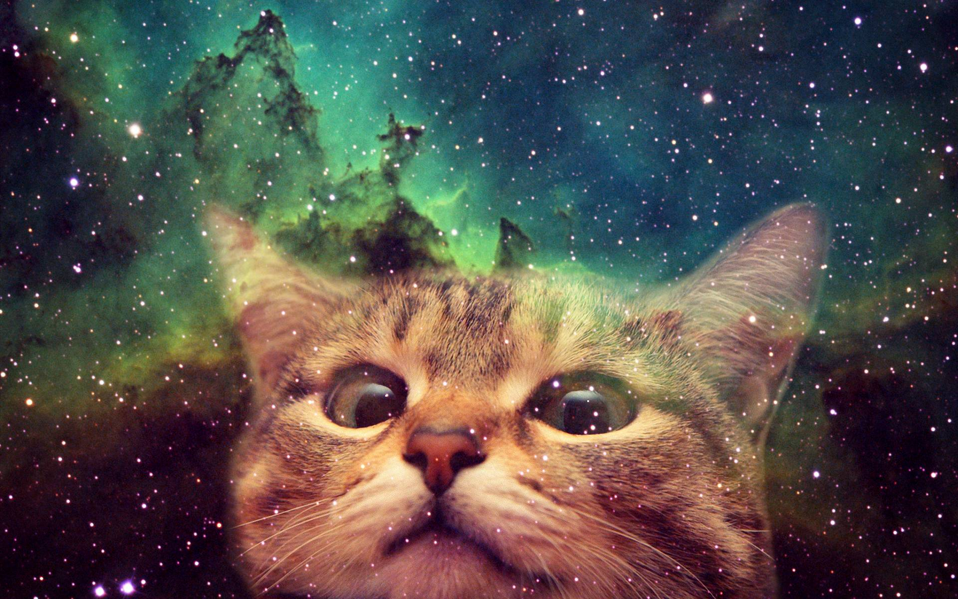 Hook-Up-Your-Desktop-With-One-Of-These-Awesome-Cats-In-Space-wallpaper-wp3806595